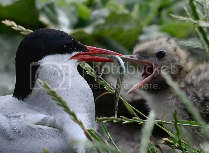 photo Farne-3_zps622681d1.jpg