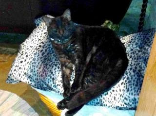 Mr Boots is now safely back home after being found in Four Marks