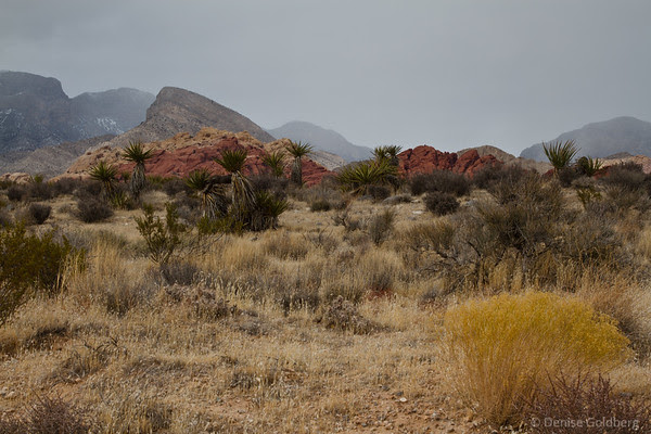 red rocks, autumn colors, Red Rock Canyon