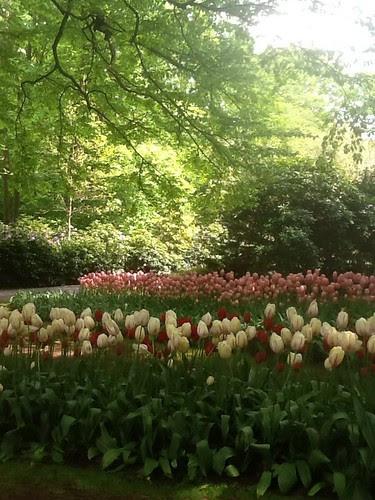 Keukenhof gardens by valspiers