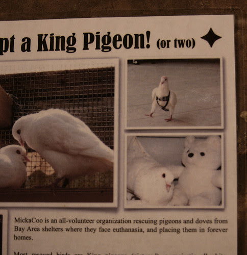 pigeon snm