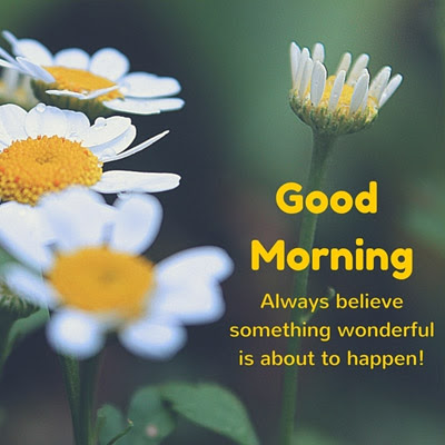Lovely Good Morning Quotes Good Morning Images Quotes Wishes