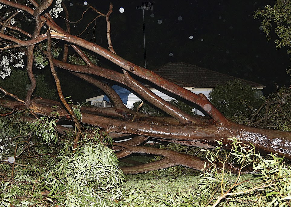 A large eucalyptus tree crashes down near a house blocking the entrance at Avalon Beach in Sydney
