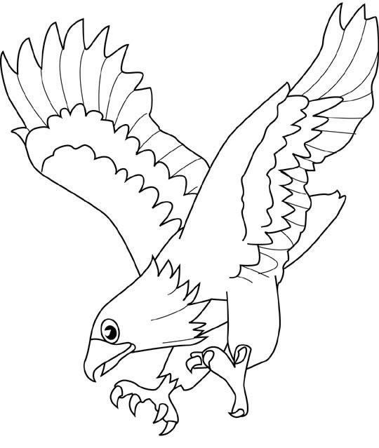 Aquila Disegni Da Colorare Di Animali