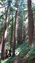 mmmm redwoods