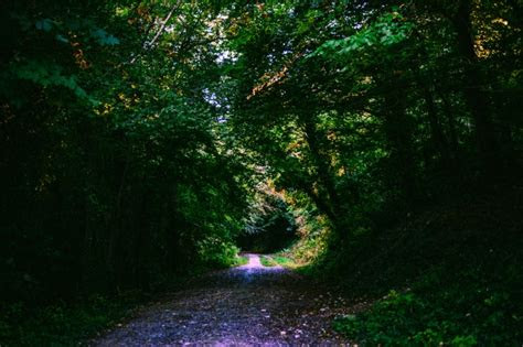 wallpaper forest path foliage green trees scenic