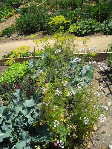 Aptos Community Garden - 6/28/2010