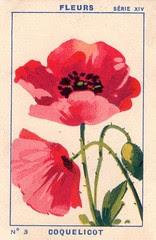 milliat fleurs001