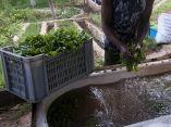 agroecologia-fernando-funes-cuba-7