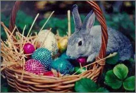 conejos-pascua-jpg.jpg