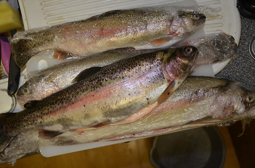 trout Oct 13