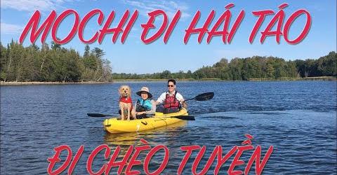 Cuộc sống Toronto - Đi hái táo ở nông trại - Mochi lần đầu đi chèo thuyền và đi bơi