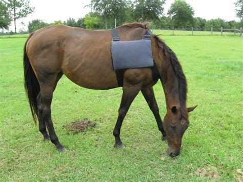 DIY Horse Ice Pack Vest   petdiys.com
