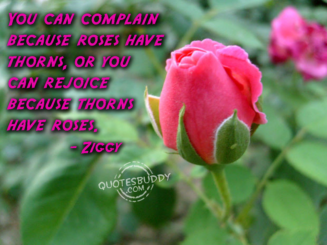 Quotes About Rose Flower 57 Quotes