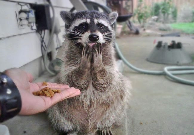 25 animals that know how to properly ask for cookies
