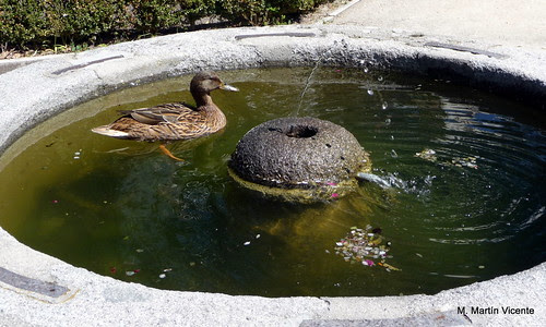 la fuente del pato