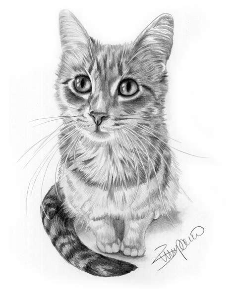 cat pencil drawing  wendy zumpano www
