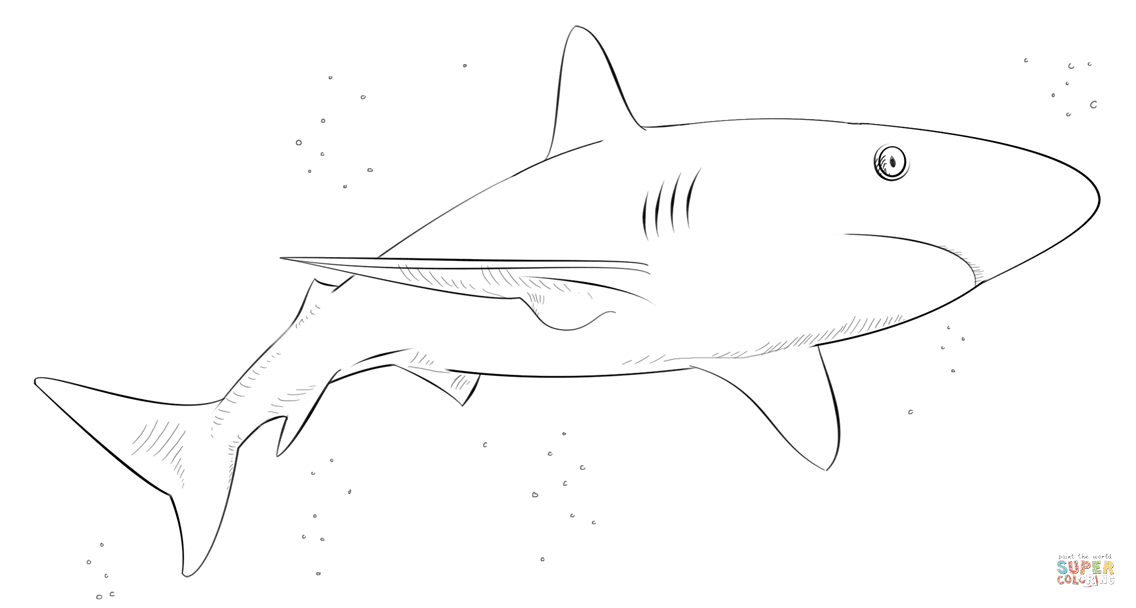Blacktip Shark Coloring Coloring Pages
