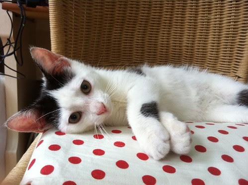 A little kitten has stolen my chair