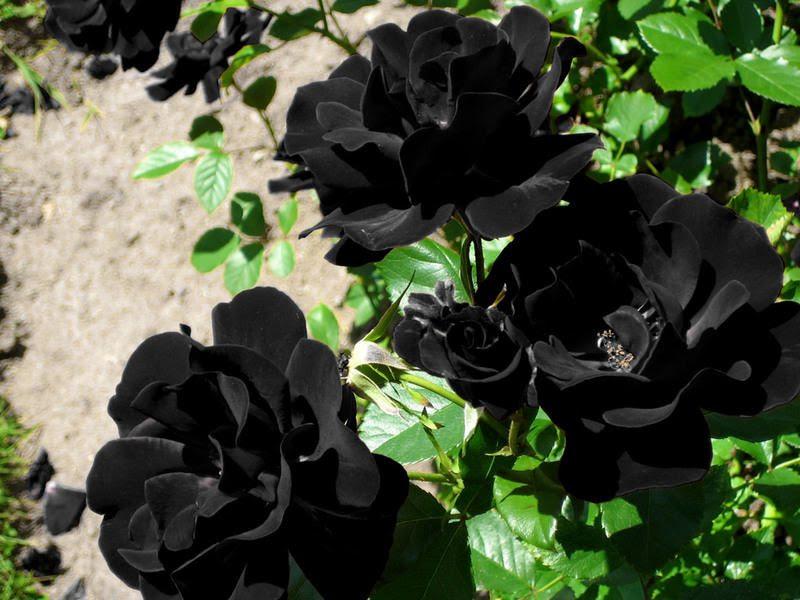 Galerías De Imágenes De Portal Rosas