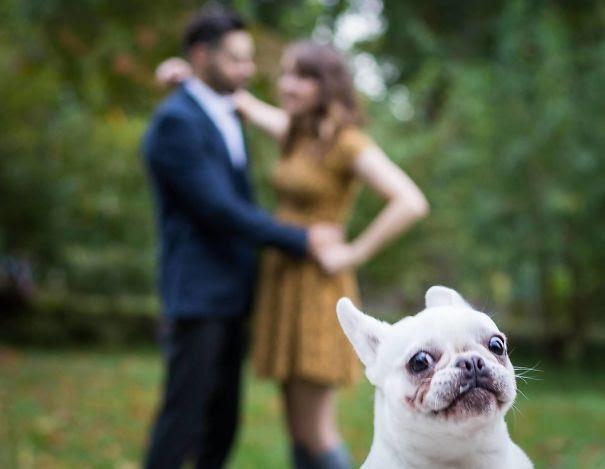 φωτογραφίες σκύλοι