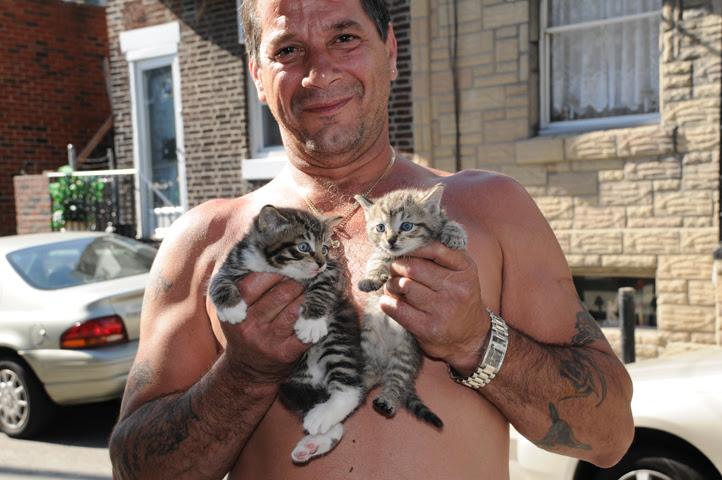 kitten mania kittens_9668 web