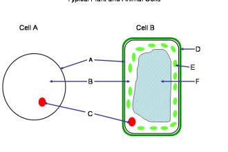 Cells quiz 330x220