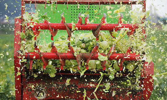 Verduras são destruídas em Hanover, Alemanha, que vive surto de infecção alimentar