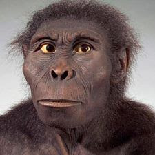 Restes crâniens de Kenyanthropus platyops et reconstitution du buste - -doc. Hominidés
