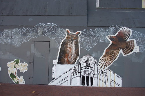 owl and hawk