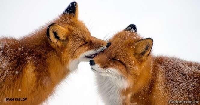 Animais fantásticos que podem nos ensinar como amar e ser fiel