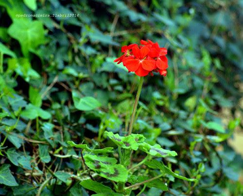 SardinheiroAbriljPblogpg.jpg