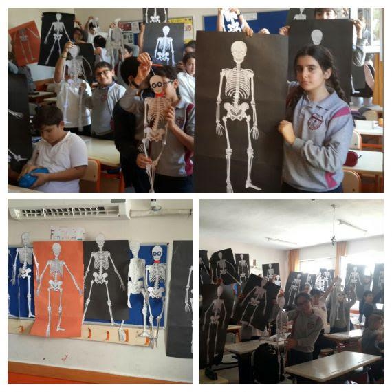 Vücudumuzdaki Sistemler ünitemizde Iskelet Modelleri Yaptık Eğitim