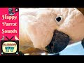 Parrot TV for Birds | Friday Flocking Parrot Sounds | Ep: 73