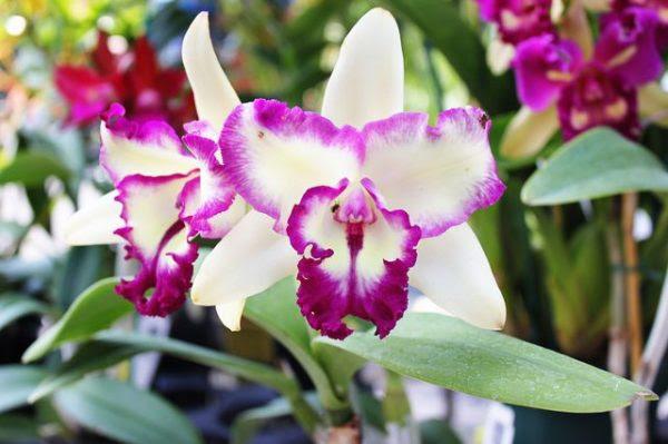 Resultado de imagen para orquideas