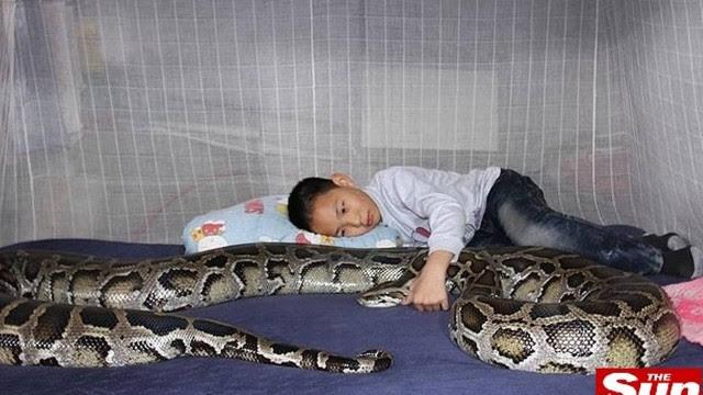 O menino vive abraçadinho com a cobra