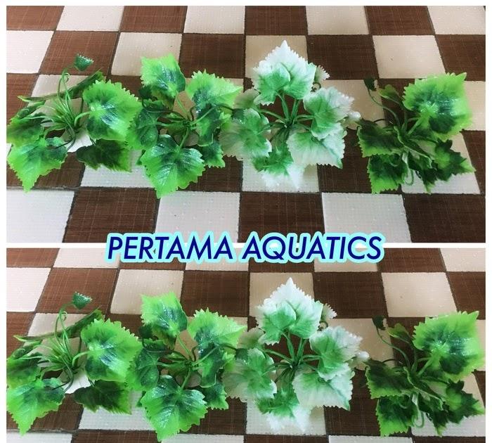 Keren Harga Tanaman Hias Aquarium - Bunga Hias