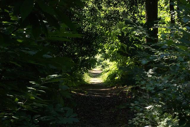 DSC_6943 Woodland path
