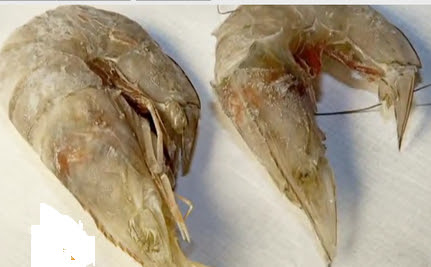 Dead and Deformed Sea Creatures Point to BP Oil Spill