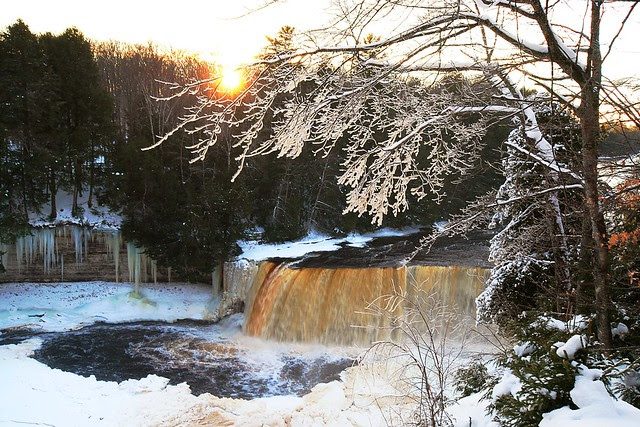 Tahquamenon falls in winter, with an ice-covered tree.