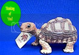 Turtle mail Pictures, Images and Photos