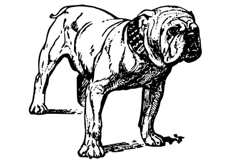33 hund bilder zum ausdrucken  besten bilder von ausmalbilder