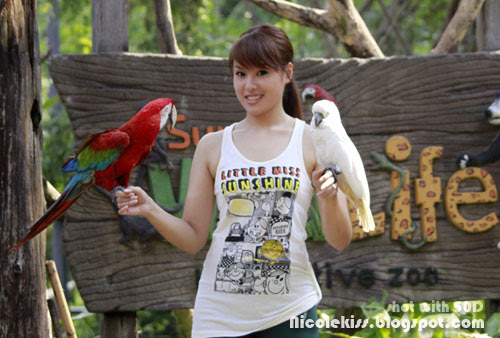 macaw and cockatoo and me