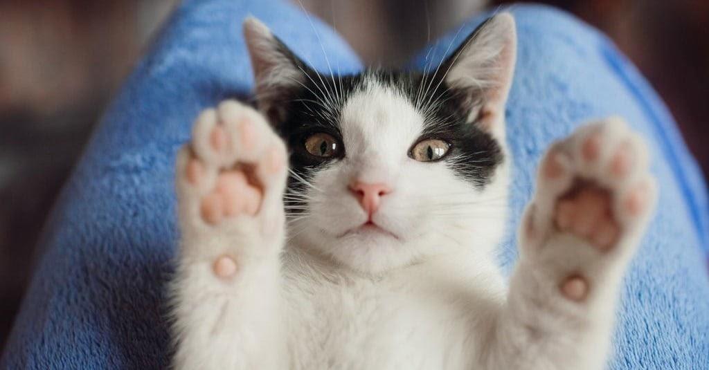 Cara Gambar Kucing Untuk Anak Tk - 81021+ Nama Untuk ...