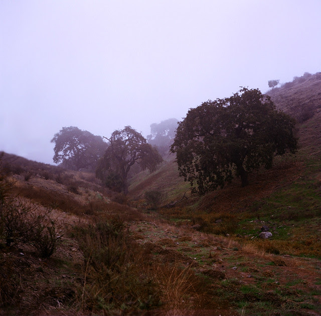 Fog and Foothills