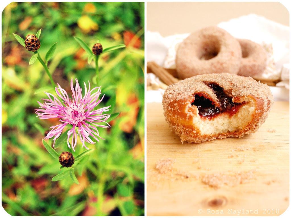 Doughnuts Picnik collage 1 bis