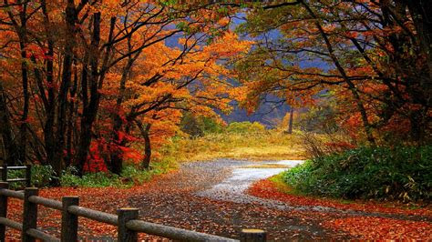 autumn wallpapers  wallpapers