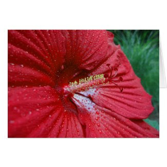 Red Hibiscus With Raindrops Card