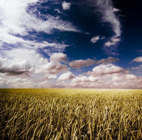 أثر التعديل الوراثي في الزراعة