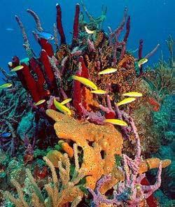 bahamas snorkeling